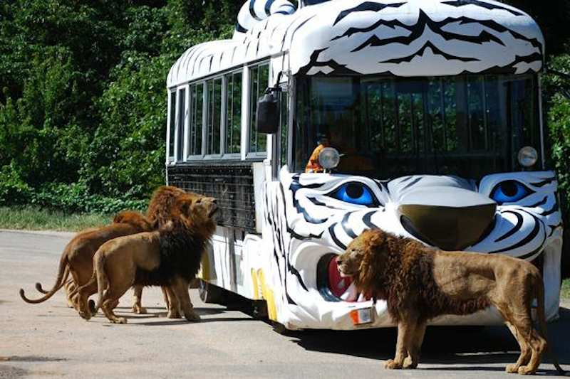Let Us Meet Wild Animals At Akiyoshidai Safari Park