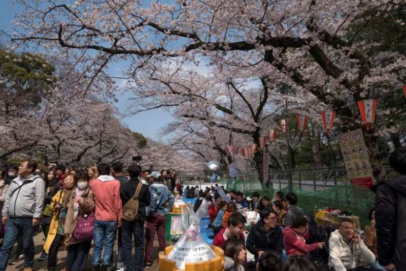 cherry blossom parties